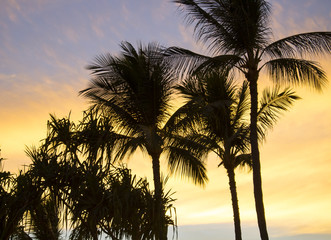 Palm Trees in Silhouette Against Sunset