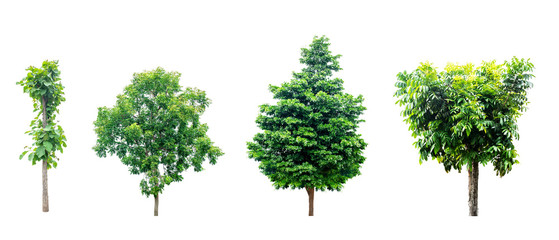 Trees isolated on white background. Cut out and path. use for architecture and decoration natural design. Save earth save life by plant, World Environment Day