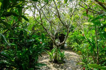 Stone Path, Walkway through Tropical Garden, Plants