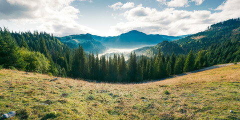 panorama of mountain and foggy valley. beautiful landscape with spruce forest on the hill. wonderful weather in Apuseni Natural Park of Romania at sunrise