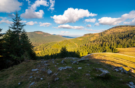 lovely autumn landscape in mountains. beautiful sky with fluffy clouds above spruce forest on hills