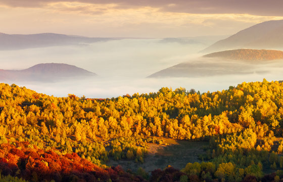 beautiful autumn landscape in mountains. cloud inversion above the valley and yellow trees in sunlight