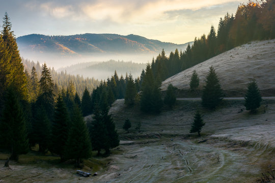 beautiful autumn scenery in mountains at sunrise. spruce forest on the hill. fog rise in the distant valley