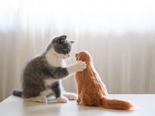 Kitten and Golden Retriever model play