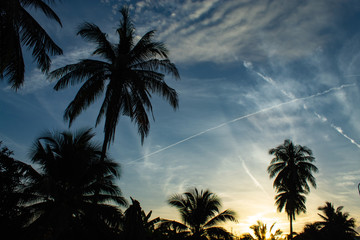 Beautiful mornings with light clouds and coconut trees.