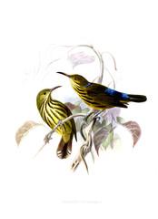 Illustration of birds.
