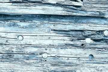 texture old tree blue / abstract wood texture background