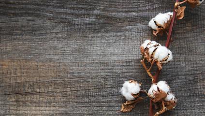 white cotton flowers