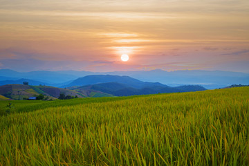 The beautiful sunset prime time on the rice paddy field at Baan Pa Pong Piang in Chiangmai, Thailand.
