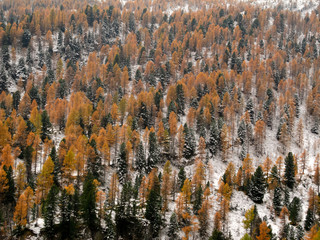 Autumn in the woods on the Italian Alps