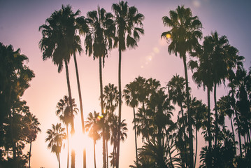 Palm trees and californian sunset