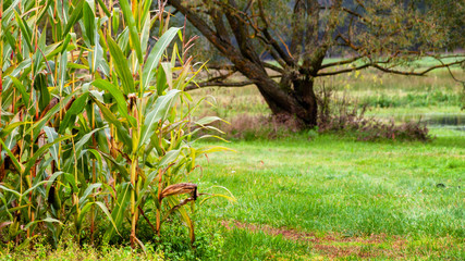 Zielony krajobraz Podlasie