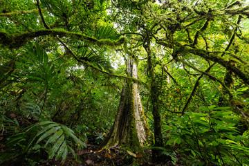 Dense jungle vegetation in Bali island