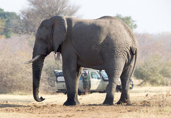 Professional photographer taking shots of an African Elephant in Namibia