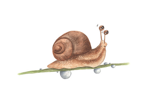 Drop of water and lovely little snail on branch, watercolor painting illustration isolated on white background.