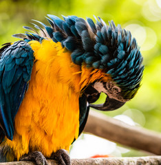 Poster Travel photo from Cartagena, Colombia. Beautiful blue and yellow macaw in natural park in Cartagena.