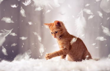 playful kitten in feathers