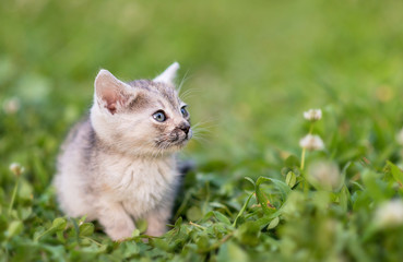 Adorable young cat in the green