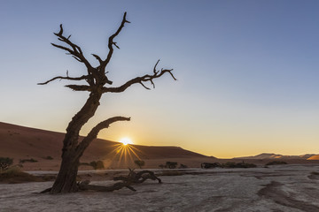 Africa, Namibia, Namib-Naukluft National Park, Deadvlei, dead acacia tree in clay pan