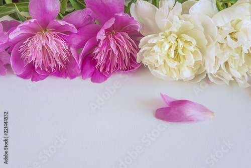 White and purple peonies flowers on white background with copy space white and purple peonies flowers on white background with copy space mightylinksfo