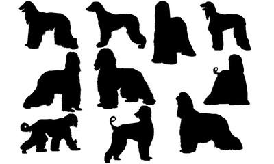 Afghan Hound Dog svg files cricut,  silhouette clip art, Vector illustration eps, Black  overlay