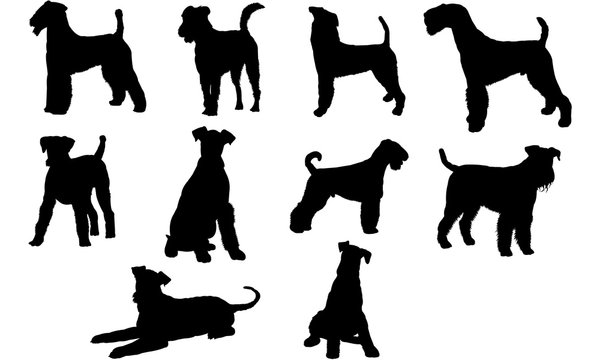 Airedale Terrier Dog svg files cricut,  silhouette clip art, Vector illustration eps, Black  overlay