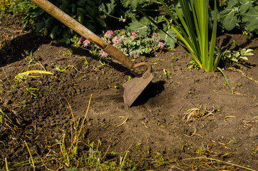 The a man frees a garden of weeds with a hoe