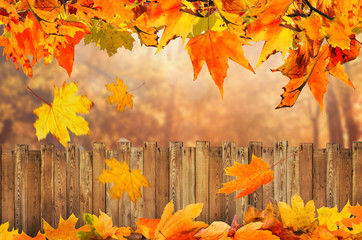 autumn background at backyard