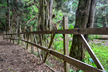 path with wooden fence in the forest