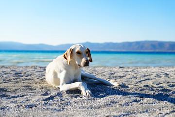 White dog is lying on white sand near Lake Salda, Burdur, Turkey
