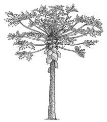 Papaya tree illustration, drawing, engraving, ink, line art, vector