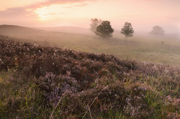 beautiful misty sunrise over hills with heather