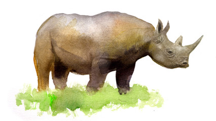 watercolor illustration of a rhinoceros, isolated drawing from the hand of a wild animal of Africa