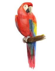 watercolor illustration of a parrot, isolated drawing by hand of a tropical bird