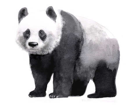 watercolor illustration of panda, isolated drawing by hand of animal