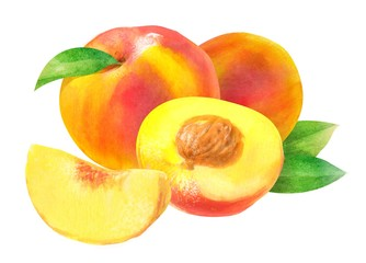 peach \ nectarine, watercolor hand-drawn drawing of a fruits, isolated illustration on a white background