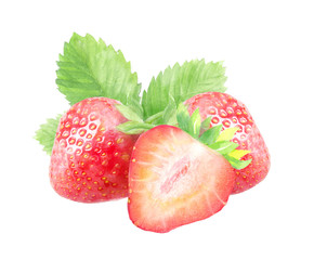 strawberries, watercolor hand-drawn drawing of a red berry, isolated illustration on a white background