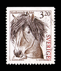 North Sweden horse's head (Equus ferus caballus), Domestic Animals serie, circa 1994