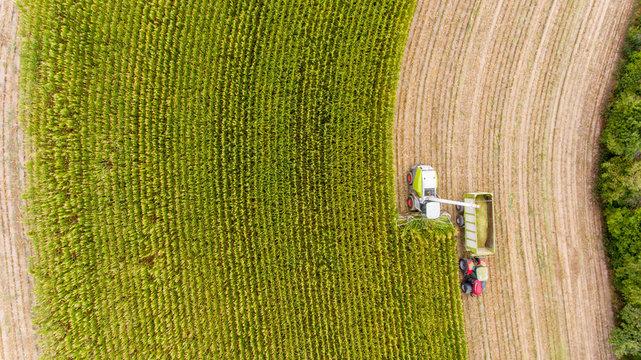 Maisernte auf Feld mit Traktor von oben