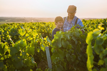 Two generations of winegrowers in their vines at sunset. Wall mural