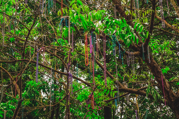 Beads hang from a tree in the French Quarters after Mardi Gras in New Orleans.