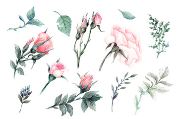 A large set of watercolors tender roses super quality.