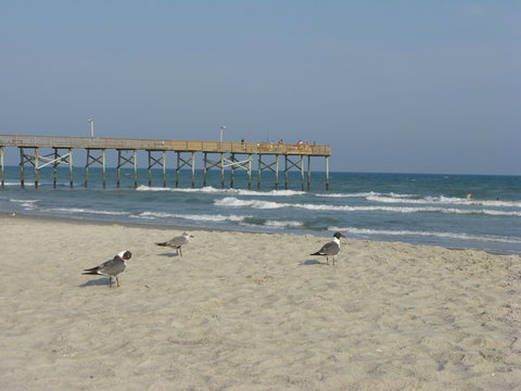 A day at the ocean shore or beach in Florida