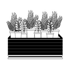 Plants in pots on stand in black and white