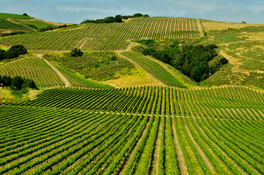 Vineyards in floodplain and along the foothills, Lompoc, California