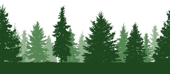 Seamless pattern. Forest, green fir trees silhouette. Vector