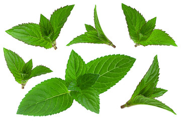 Mint herb leaf collection on white