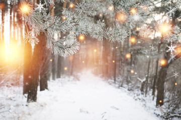 Christmas background. Winter forest with glowing snowflakes. Christmas forest with snowy road. Pine branches with hoarfrost. Xmas and New Year time in december