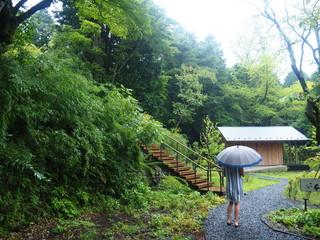 Amazing Rainy Day Jungle