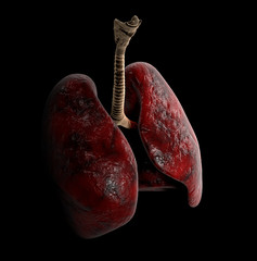 Human Lung anatomy, 3d Illustration on black background